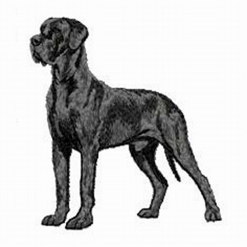Ecusson Brode Grand Danois Dogue Allemand Un Grand Marche