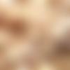 21 mm - coquillage cauris blanc percé d'un trou