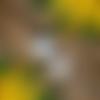 Bougie fleur de mimosa - la petite etincelle
