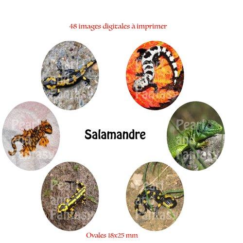 "Images digitales ovales ""salamandre"" 18x25 mm"