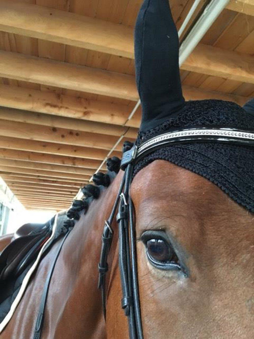 "Frontal cheval modèle "" Saumur"""