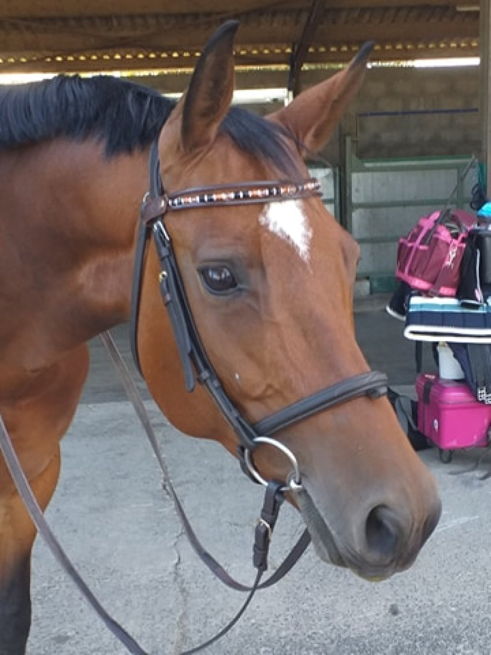 "Frontal cheval modèle "" Alice"""