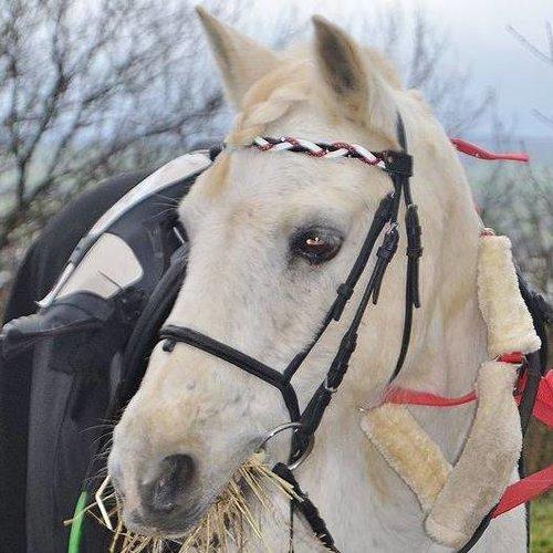 """Frontal cheval modèle """" dunes"""""""