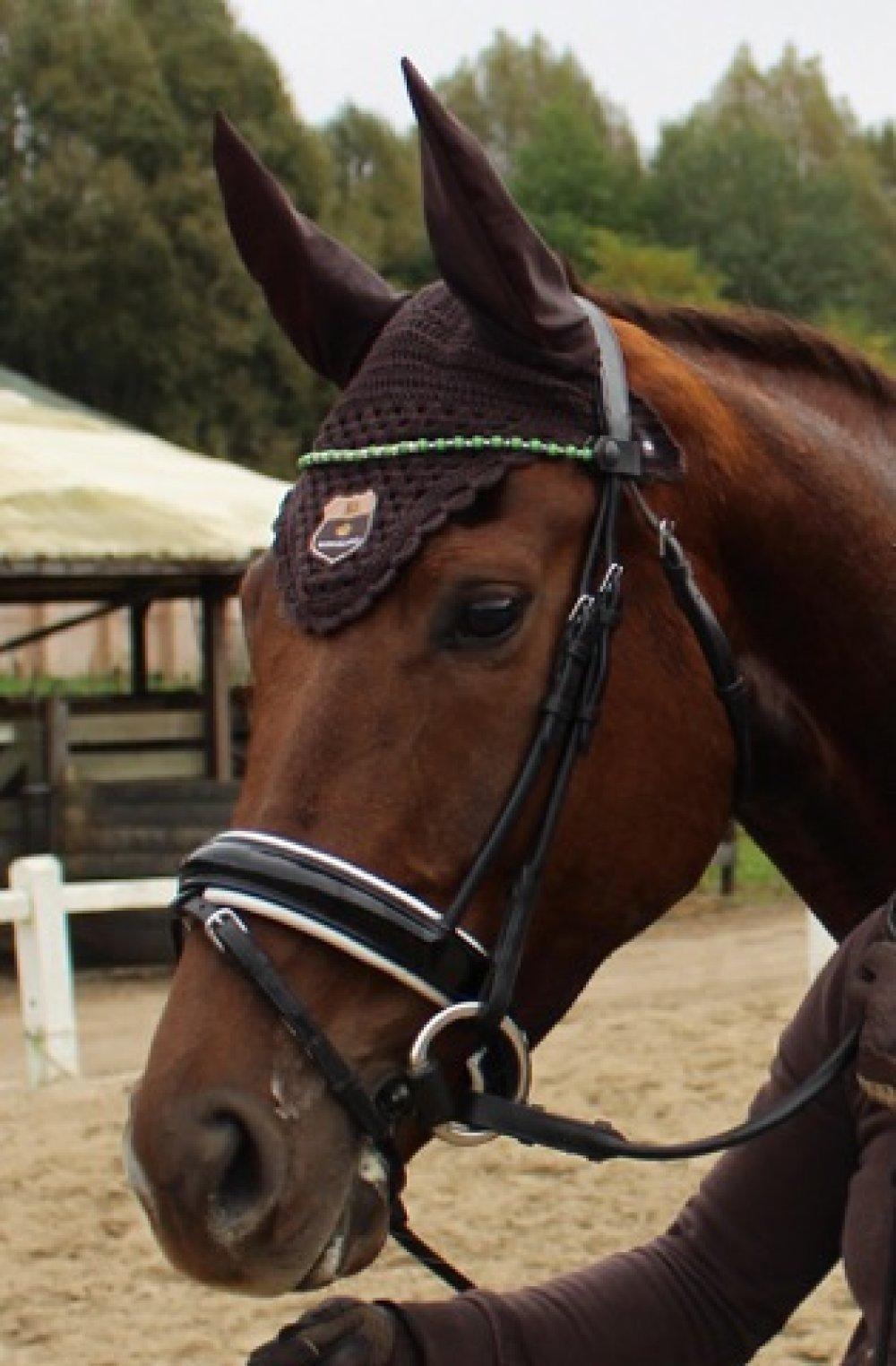 """""""Clip & Ride""""  : ensemble de 3 frontaux chevaux modèle """" Simple rang""""."""