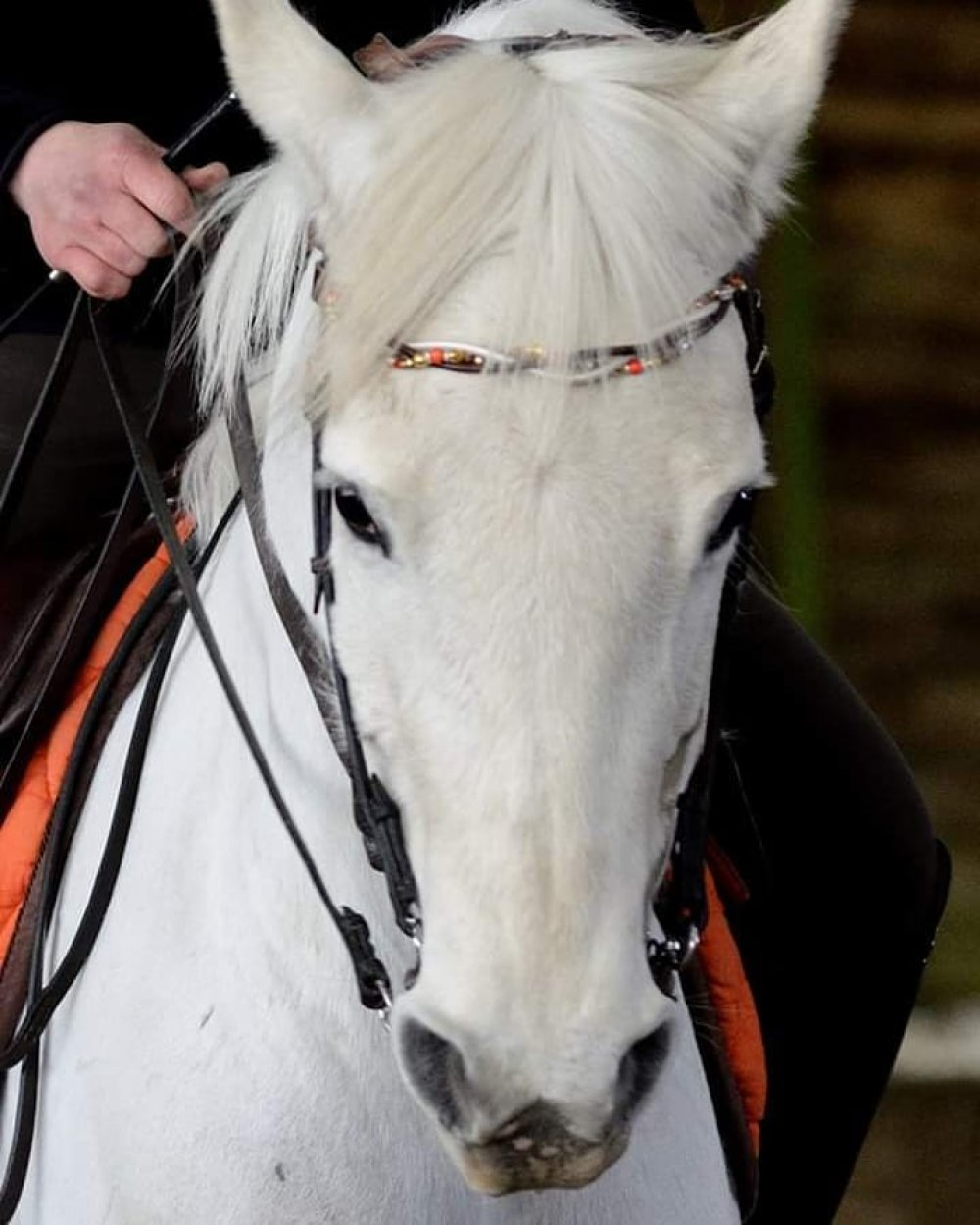 """Frontal cheval modèle """" Maylis"""""""