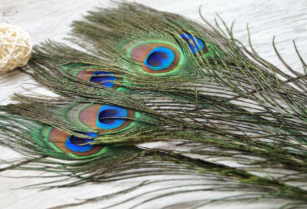 10 plumes naturelles de paon, 20-30 cm