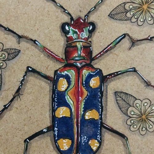 Cadre cicindèle cosmodela aurulenta sur bois
