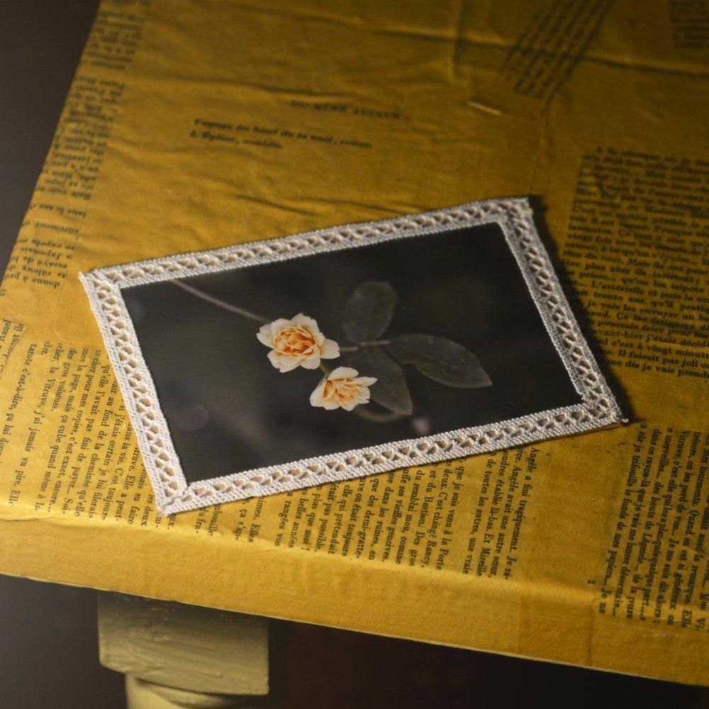 Carte postale et enveloppe - Rosier anglais