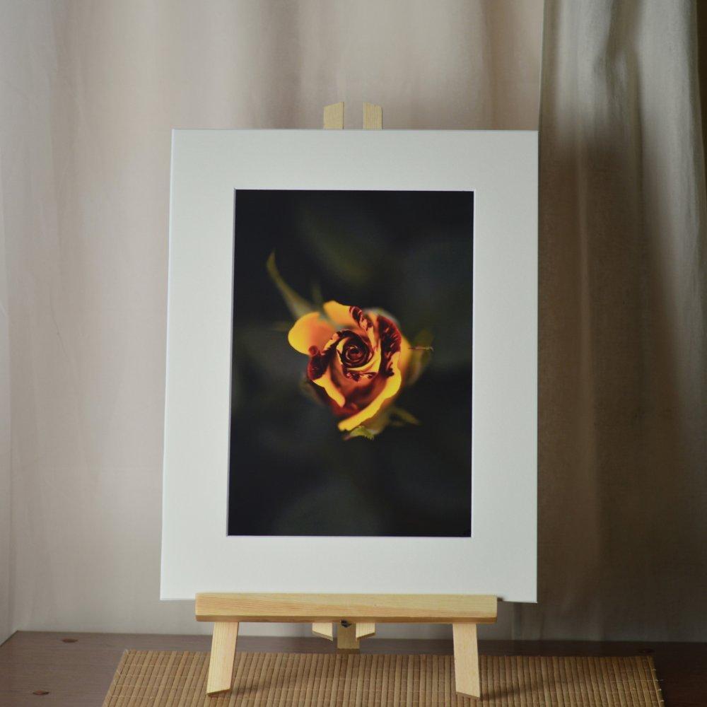 Impression photographique couleur - Fleur