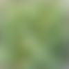 Perles à facettes vertes 6x4mm x30 pve5-14.