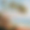 1 serviette en papier paysage - mer - palmier - palm beach - ref 1764