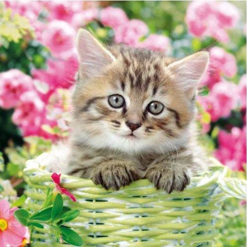 1 serviette en papier chat - ref 2071