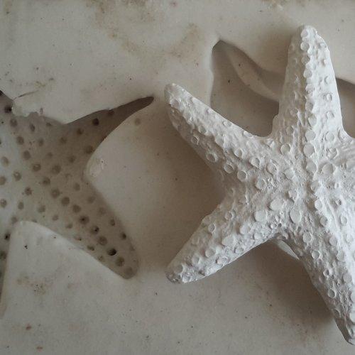 Moule étoile de mer