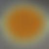 Napperon rond, couleur dégradée jaune orange, fait main au crochet, diamètre 40 cm