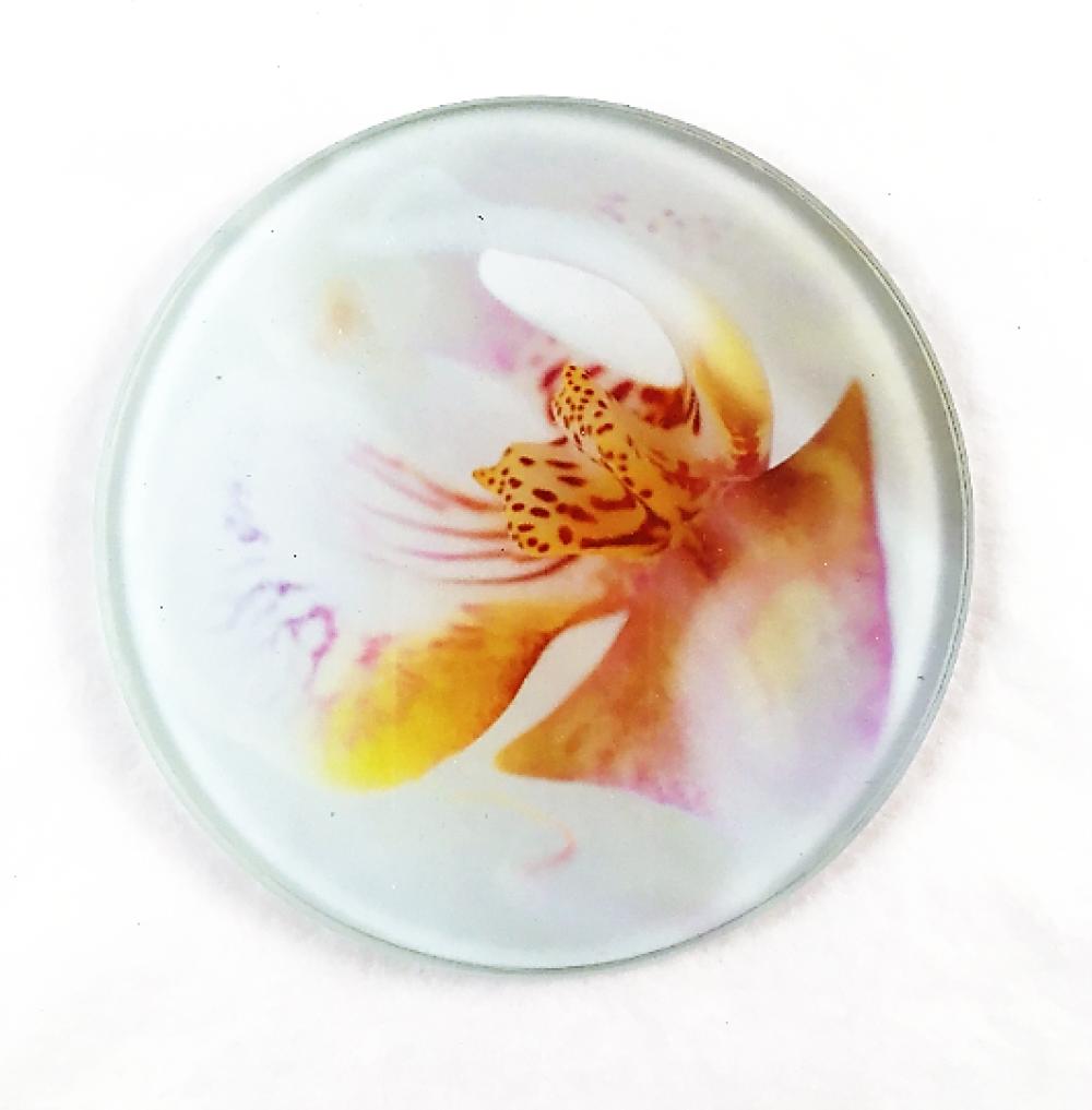 """Les 6 Sous Verres """"Orchidées"""", en verre"""