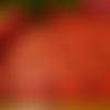 Guipure à petites fleurs rouge 19 cm large