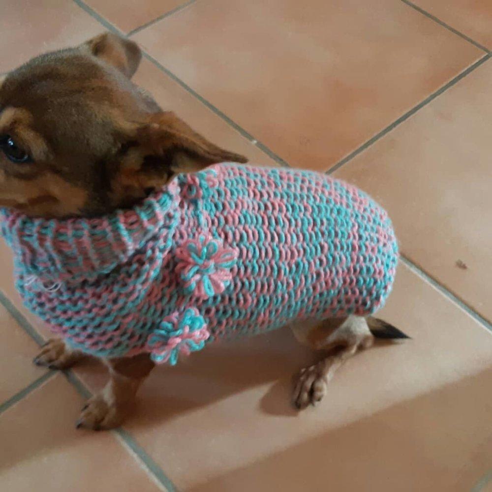 Pull petit chien taille M vert et rose