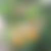 Boucles d'oreilles rosace doré et demi lune éventail en émail moutardes