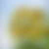 Fenêtre sur cour : peinture figurative florale huile au couteau sur toile sur châssis