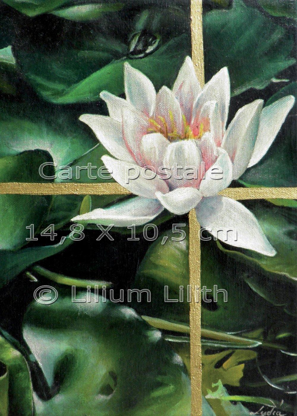 Carte postale, lotus, nénuphar, (peinture à l'huile)