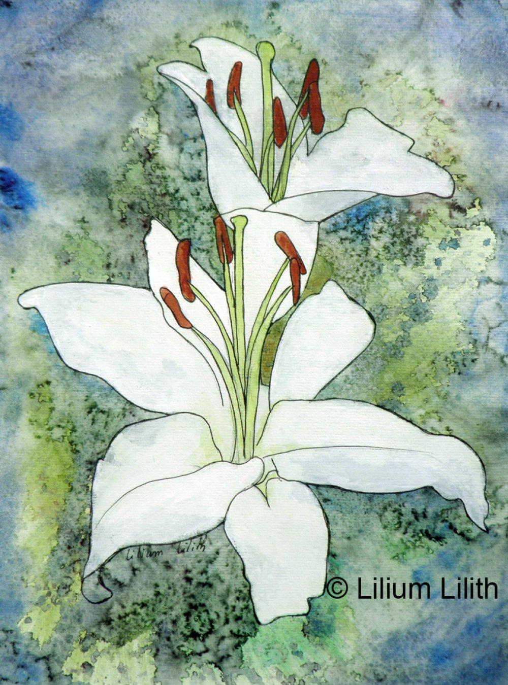 Aquarelle. Lilium , Lys blanc