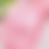 5m de ruban satin rose layette - 3mm