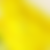 5m de ruban satin jaune impérial - 3mm