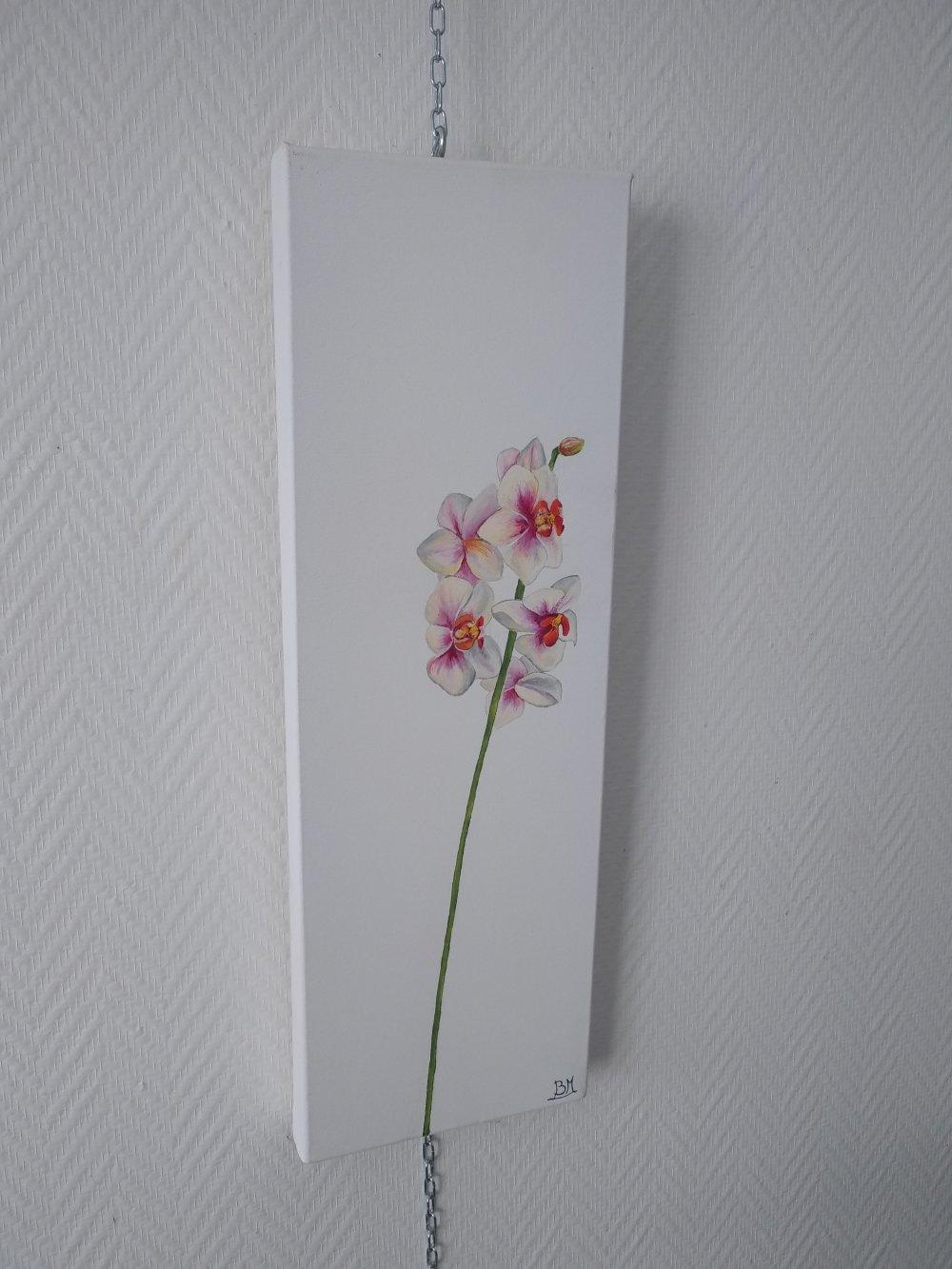 l'orchidée rose et blanche, fleur, 20/60cm