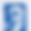 Cyanotype impression botanique