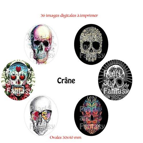 "Images digitales ovales ""crâne"" 30x40 mm"