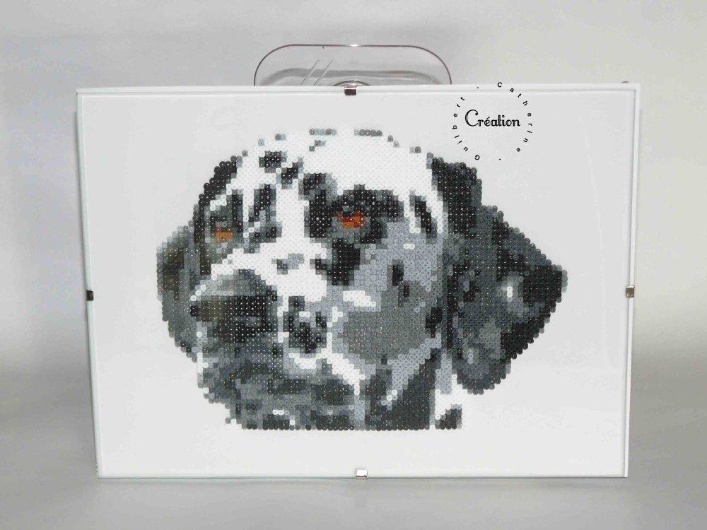 portrait dalmatien
