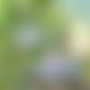 Boucles d'oreilles grue origami roses et bleues