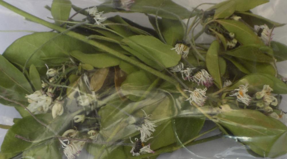Confettis en vrac,fleurs séchées,confettis de mariage,cascade de fleurs,fleurs biologique,produits de mon jardin,biodégradable
