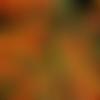 Pyracantha coccinea orange,graines de pyracantha,les herbes,épices, produits de mon jardin, plante bio,cueilli et séché,à l'air libre