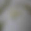 Boutonnière - broche pour mariage - crème vert et gris -orchidée