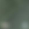 Tissu micro éponge de bambou - vert romarin