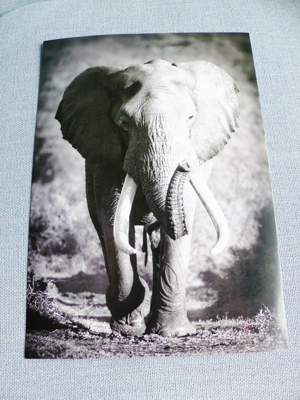 affiche A4 elephant animal sauvage afrique poster