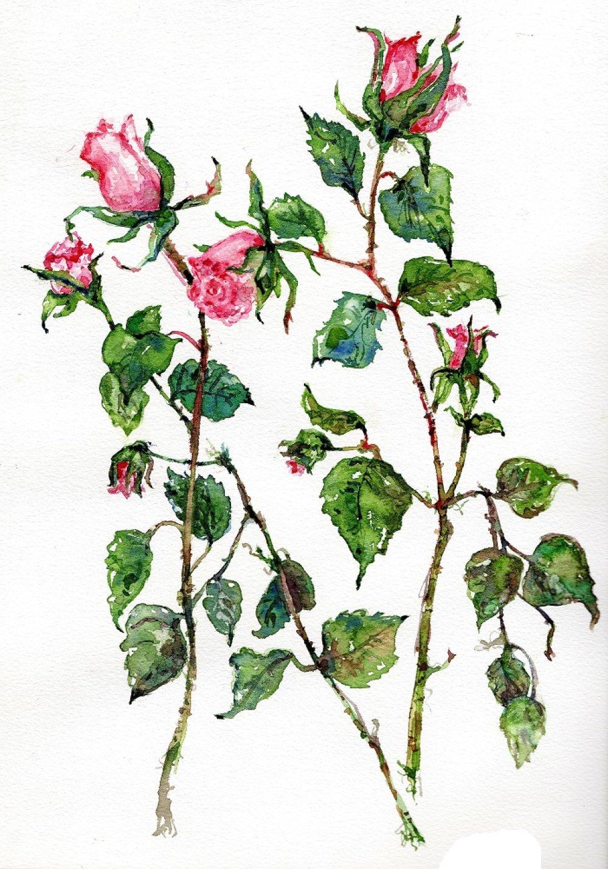Aquarelle, peinture, tableau, poires, nature morte, pour sous-verre.