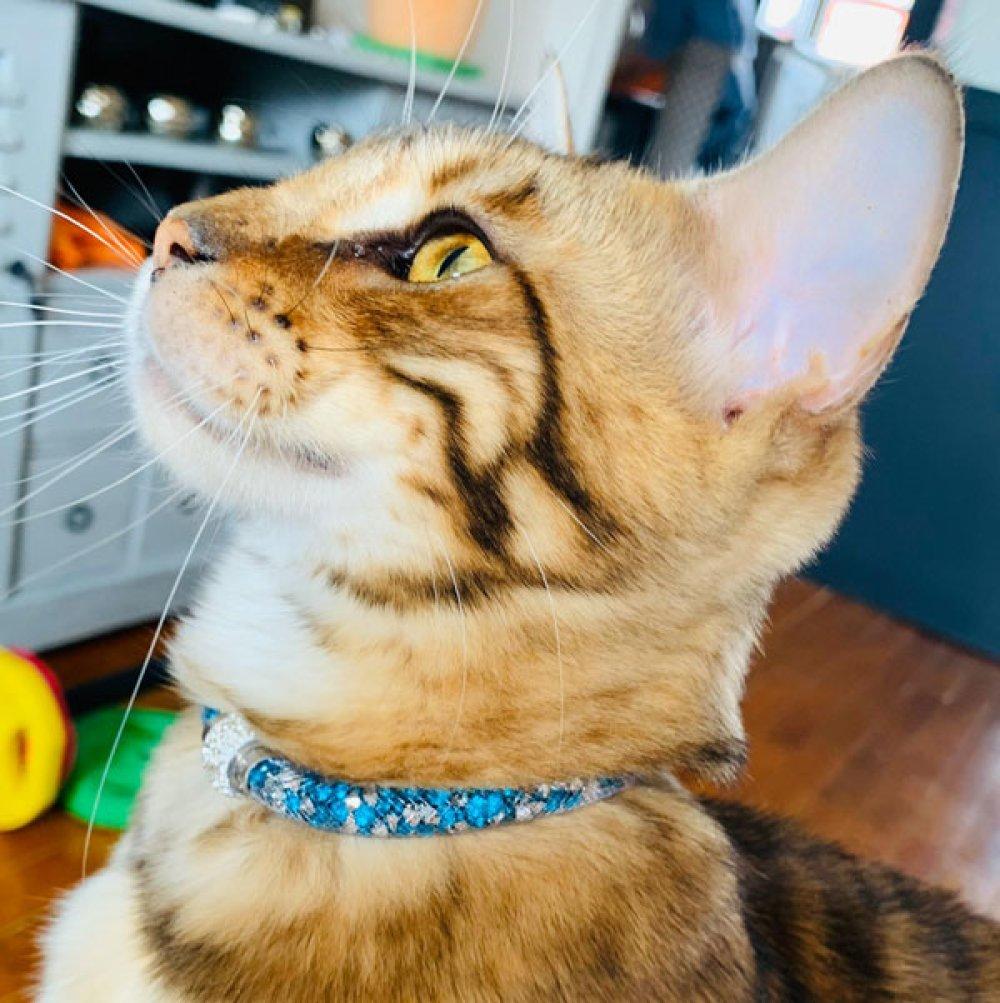 collier strass turquoise bijoux d'intérieur pour chat