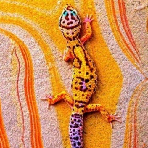 La carterie du gecko