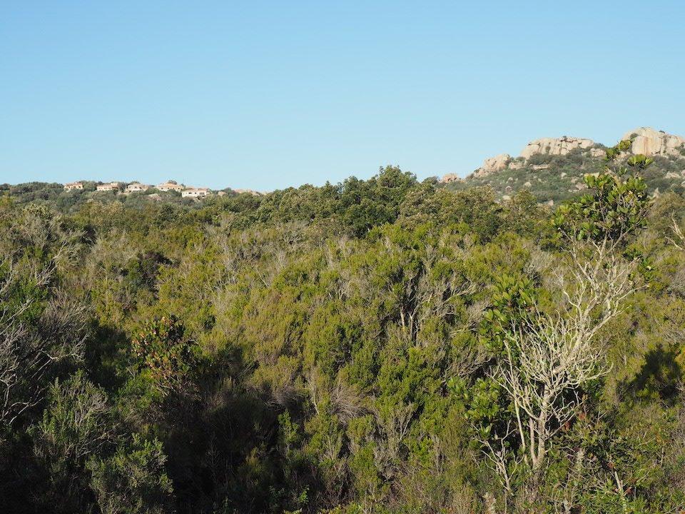 Terrain 1.47hectare à Pianottoli-Caldarello