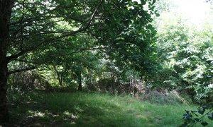 Terrain 1783m² Cognac-la-Forêt