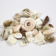 Creotime strand schelpen kralen 9 - 40 mm